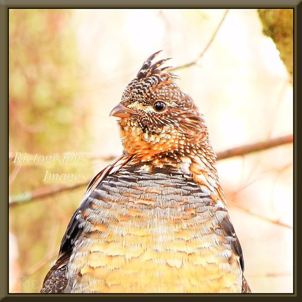 Birds:\Rictographs, Birds