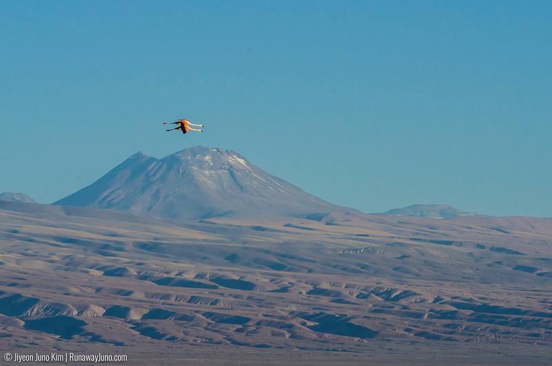 10.12_Atacama-9534.jpg
