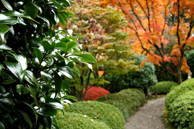 Portland Japanese Garden  11-11-11  3555.jpg