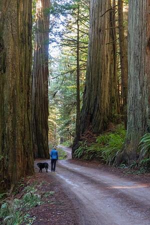 redwoods drive