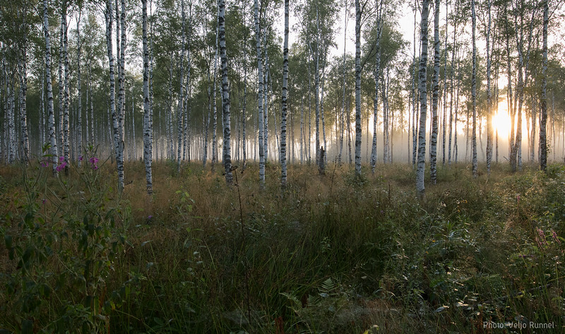 20190820_Smolnitsa_151_2000.jpg