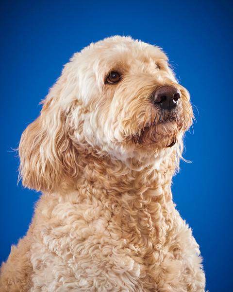 2016_12_24_Christmas Dogs4174 1.jpg