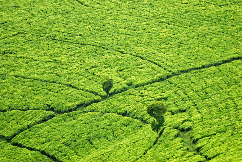 070113 4023 Burundi - Teza Mountains and Tea fields _E _L ~E ~L.JPG