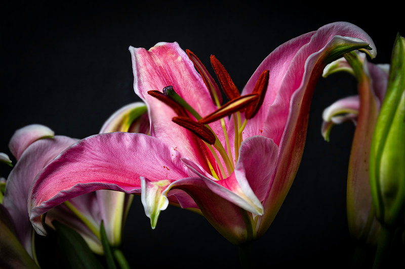 Lily2020-21.jpg