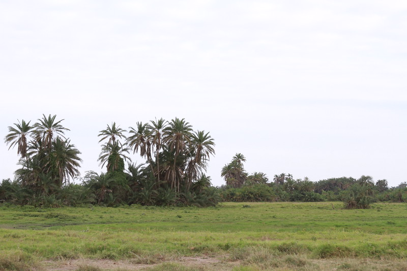 Kenya 2019 #2 362.JPG