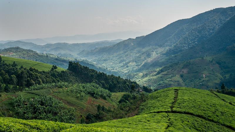 Nyugwe-Rwanda-14.jpg