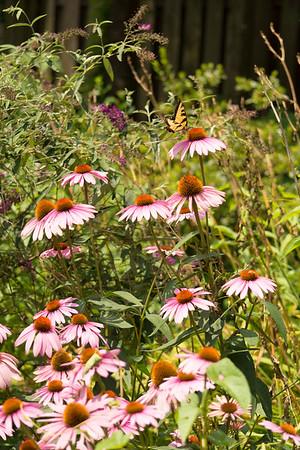 Garden Images Summer 2015
