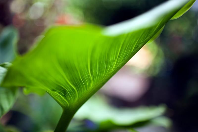 Garden plant blade, Seville, Spain