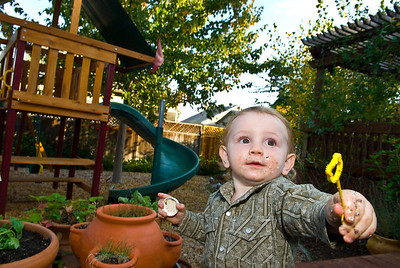 Weston Adoption