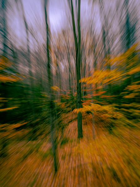 Running very fast through the woods in Fall while taking a photo!