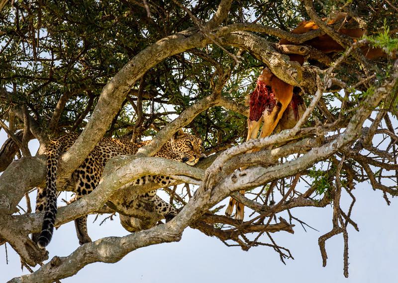 Kenya_PSokol_0619-1297-Edit.jpg