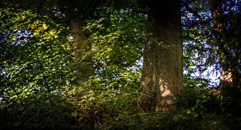 Forest Shadows-148.jpg