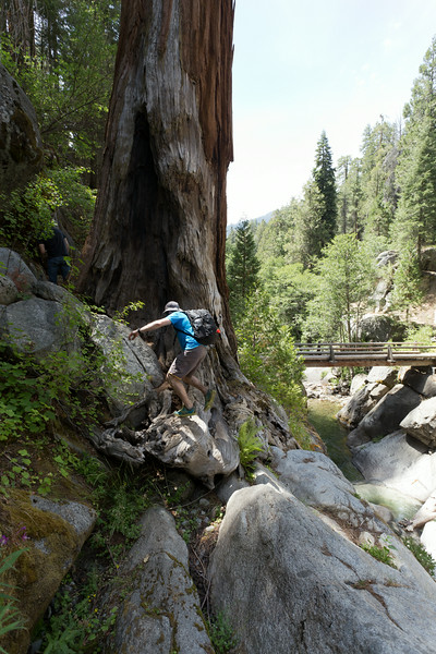 Sequoia_0595.jpg