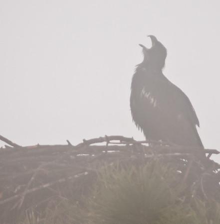 Melbourne Eagle's Nest Feb 28, 2012