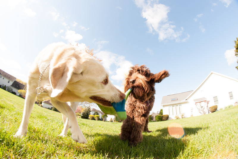 dogs and fisheye-05088.jpg