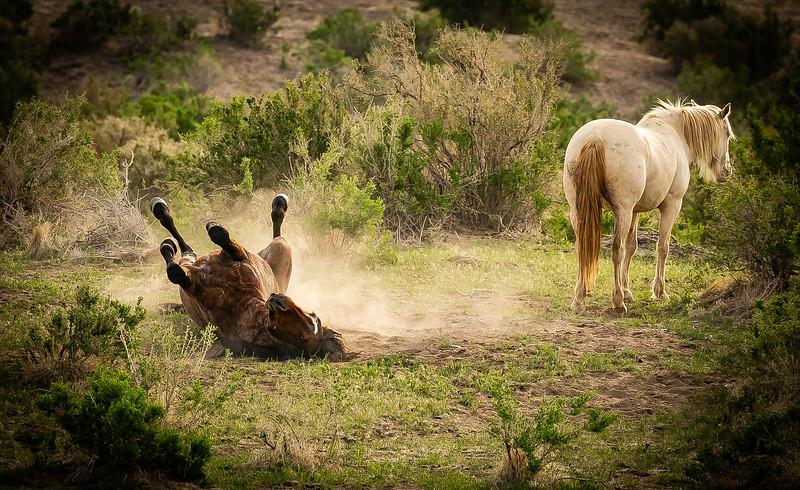 Rolling in the dust.jpg