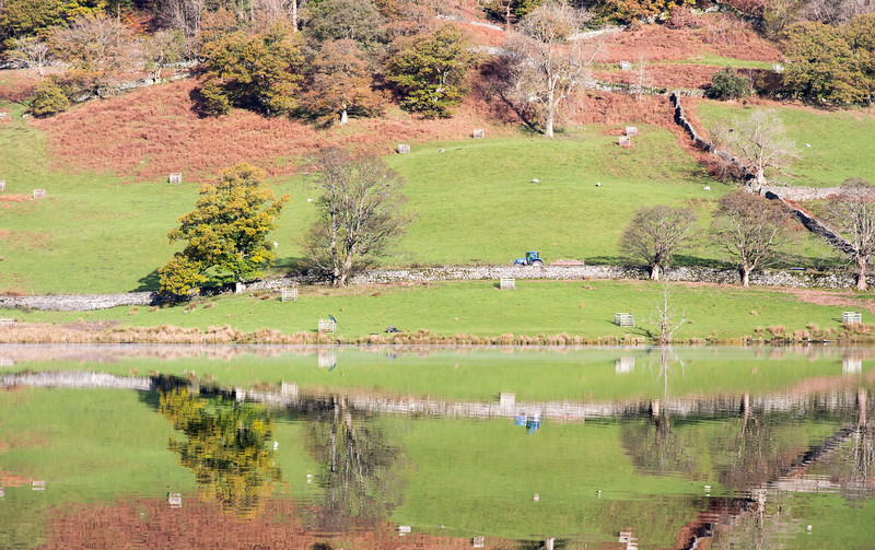 Farming at Rydal Water
