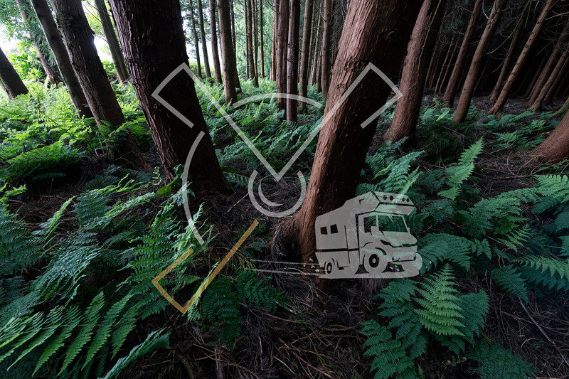 Entrance of the dark forest at Terceira island, Azores