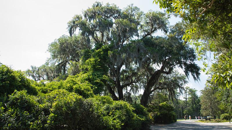 180512-154940-Charleston-4358.jpg
