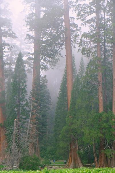 California Day 6 Sequoia 05-30-2017 107.JPG