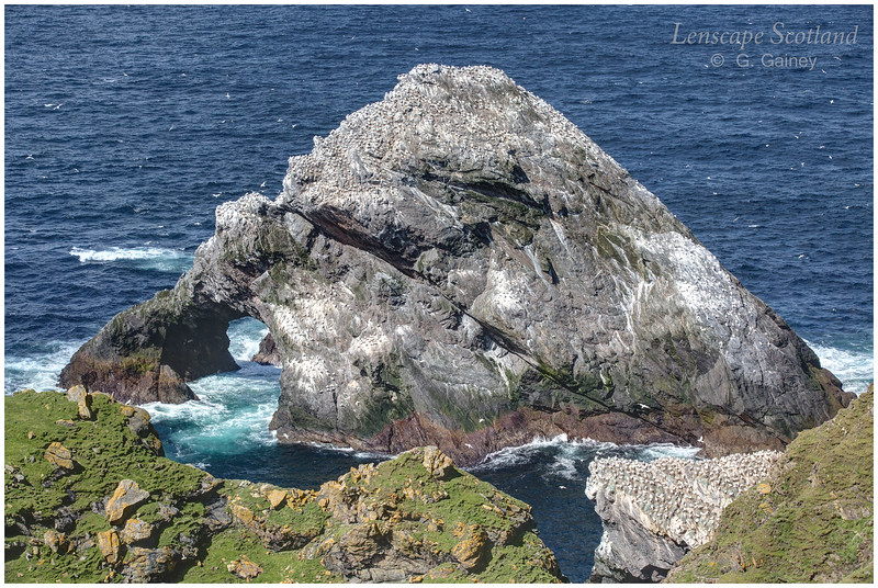 Herma Ness natural arch and gannetry (2) (Unst)