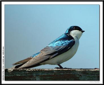 Binder Birds