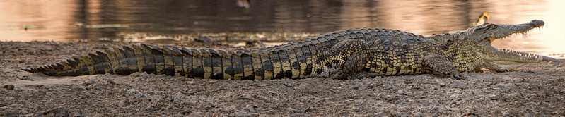 2014-08Aug-Okavango Masters-88-Edit.jpg