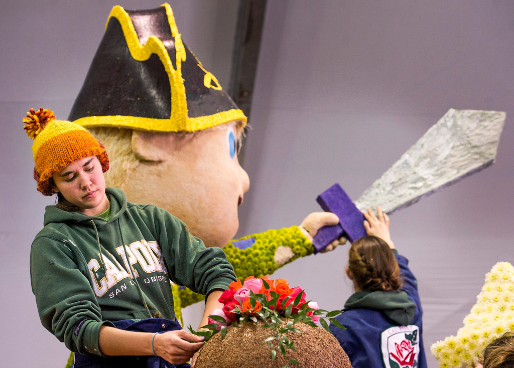 . Cal Poly SLO student Elise Willcox, 20,  applys flowers to the university\'s Rose Parade float which is a joint venture between the Pomona and San Luis Obispo campuses at the Brookside Pavilion in Pasadena, Calif. Dec. 30, 2013.   (Staff photo by Leo Jarzomb/Pasadena Star-News)