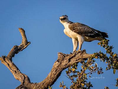 Birds of Kruger NP