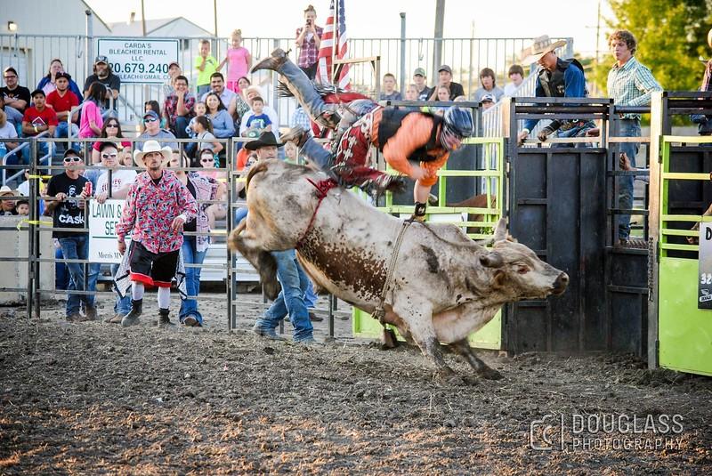 bull .jpg
