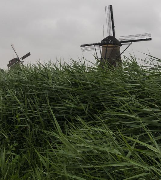 Kinderdijk Netherlands Windmills June 30, 2017  006.jpg