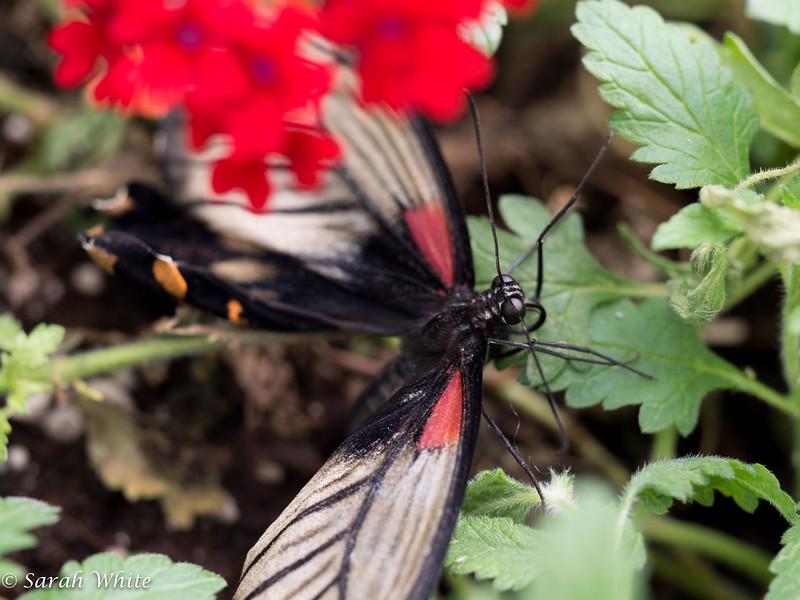 140503_ButterflyHouse_376.jpg