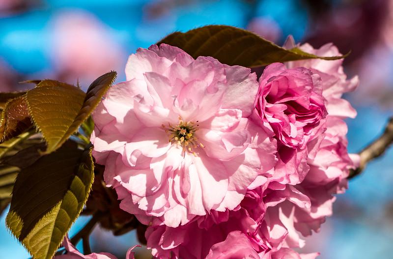 170408_01_6321_Blossoms-1.jpg