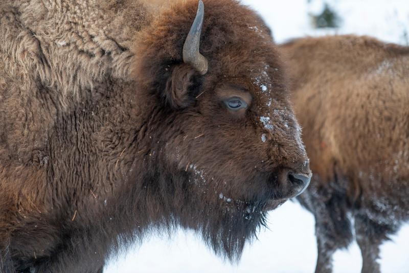 _AR70748 Buffalo profile headshot.jpg