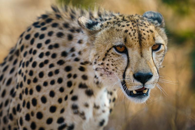 LeopardHills-20191028-0631.jpg
