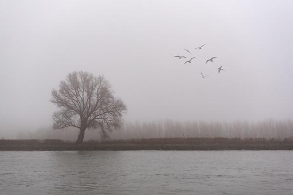 Rhine December 2016
