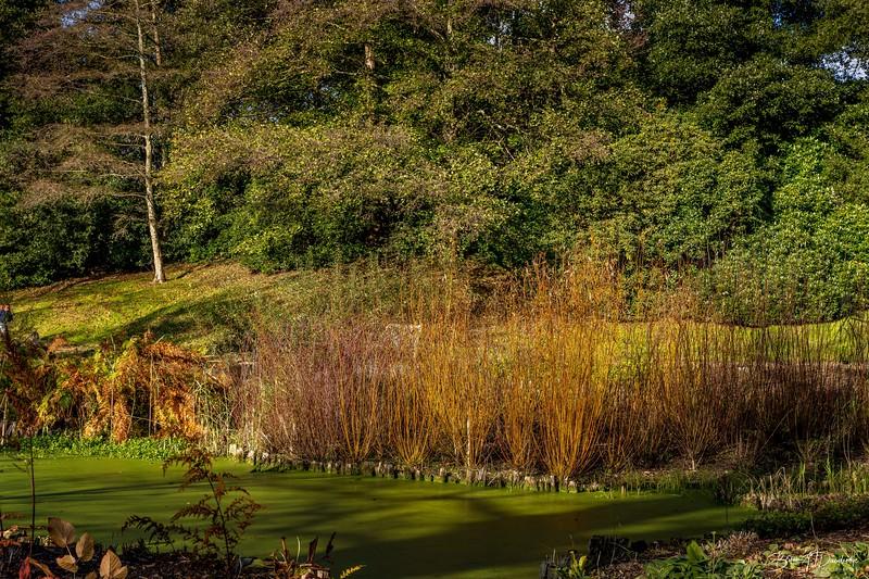 Wakehurst_Autumn-6089.jpg