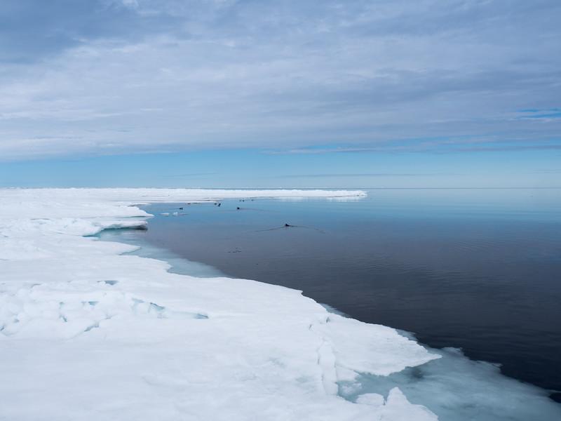 Bylot Island-1030479.jpg
