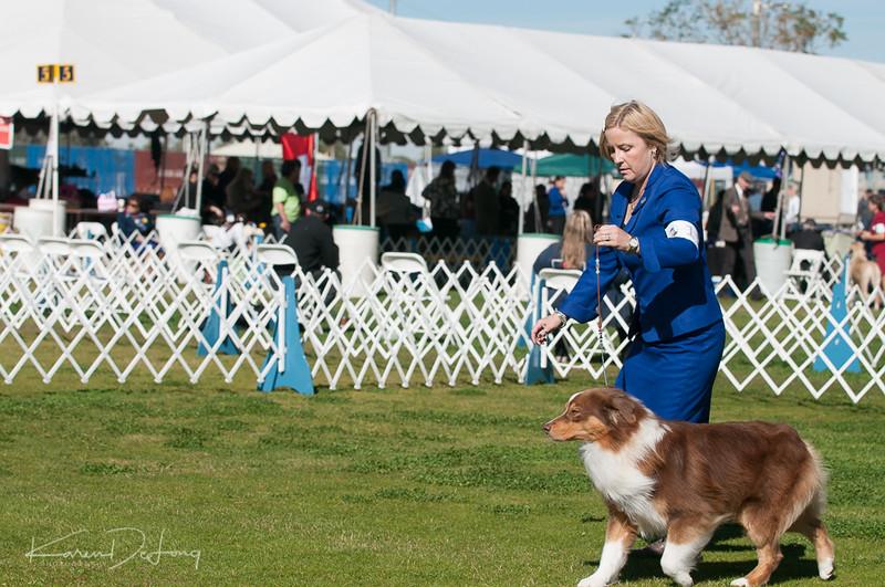 20170205_Australian Shepherds_Lost Dutchman Kennel Club-8.jpg