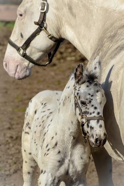 Horses-1086.jpg