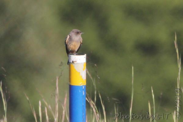 2010-09-24 Audubon Society of Missouri Fall Meeting