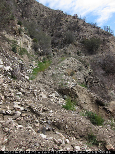 20100404035-Angeles National Forest, Strawberry Peak trail.JPG