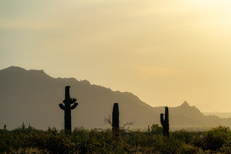 Morning sky over the Sonoran Desert of Arizona with saguaro cacti in the foreground.