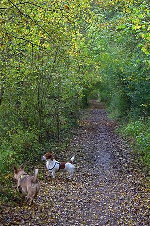 SKELLINGTHORPE OLD WOOD DOG WALK