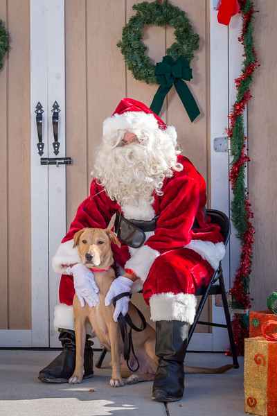 Pet Pictures With Santa-53.jpg