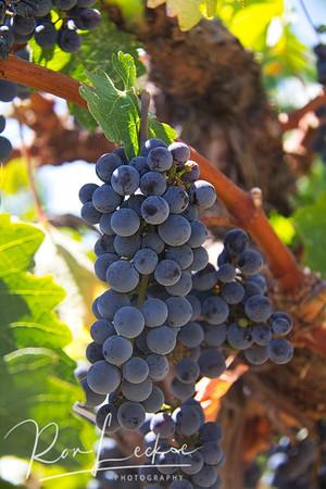 California's Wine Regions