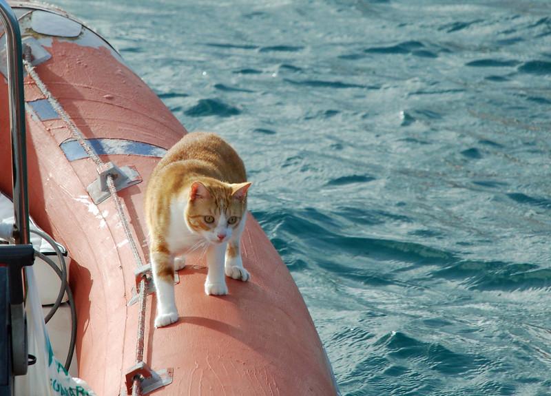 Cat_Boat.jpg