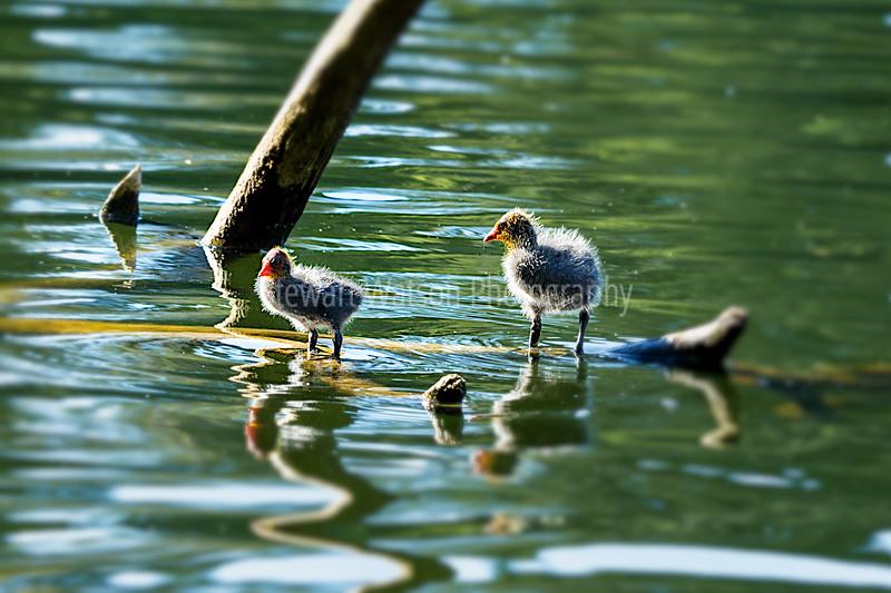Virginia Lake Whanganui