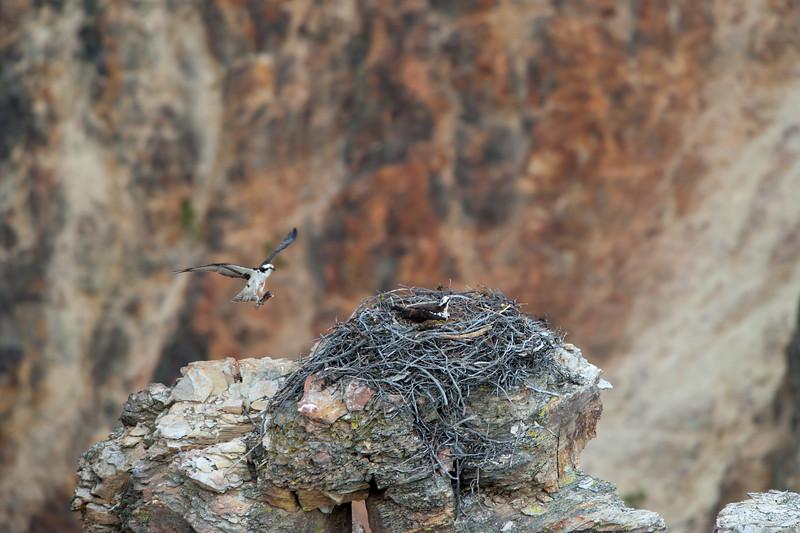 Osprey Take Home Meal