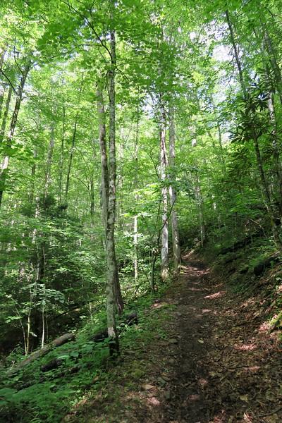 Hyatt Ridge Trail - 3,120'